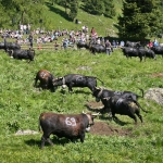 Confrontations begin at Fest Inalpe Tortin 2012