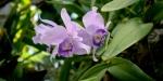 Greenhouse Orchids in Frutigen Switzerland