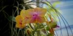 Swiss Tropenhaus Orchid