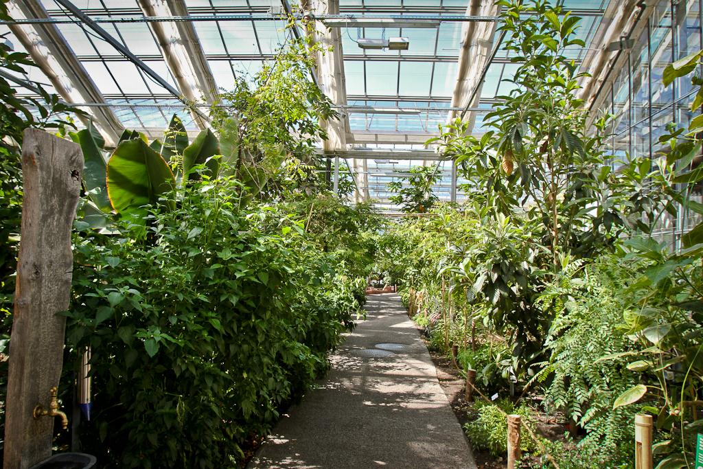 Tropical Plants in Tropenhaus