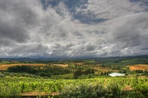 Tuscan Vineyard - Tavarnelle Val di Pesa