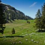Aelggialp Meadow