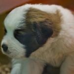 Reyka's Pup