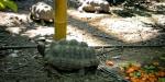Greenhouse Turtles